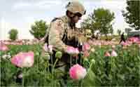 Afghan borders turning trade centers for heroin