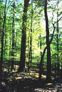 Bush administration agrees to protect forests from logging in three U.S. states
