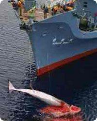 Protesters attack whaling ships in Japan