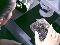 Scientists acquire control over diabetes using human embryonic stem cells