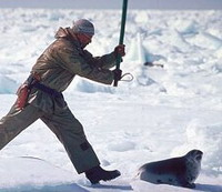 Canada limits seal hunt