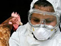 Avian flu outbreak at Russian farm; 600,000 chickens killed