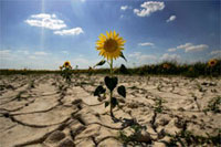 Anomalous Heat Promises Year of Hunger to Russia