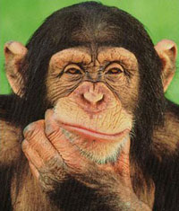 Research: chimps outdo human adults in short-term memory tests