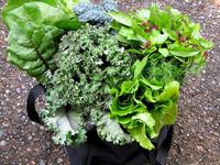 Leafy Greens May Endanger Your Health