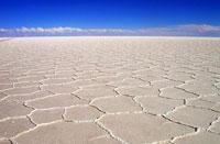 Salt lakes make dinosaurs reign on Earth