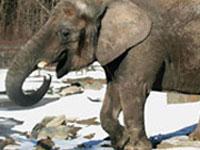 Maggie elephant (360gradusov.lv)