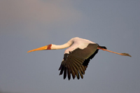 Waterbirds population declines because of global warming