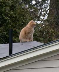 U.S. man to face trial in fatal arrow attack on neighbor's cat