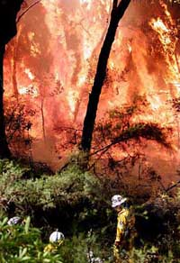 Danger to homes eases slightly as wildfires rage near Sydney