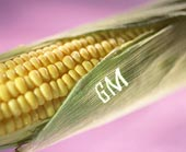 WTO rules EU broke trade rules by stopping genetically modified food imports