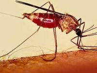 Malaria: 50% of the world's population at risk. 44094.jpeg
