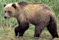 Bear attacks little boy in Moscow park