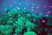 Increasing appetite for live fish stripping Asian reefs bare