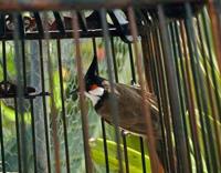 'Bird-boy' found in Russia