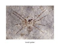 Largest spider in history found. 44101.jpeg