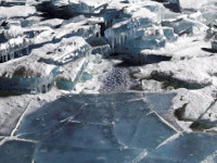 Surviving under under ice. 54108.jpeg