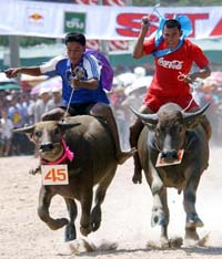 Cambodia's Festival for the Dead ends with 'Formula 1' buffalo race