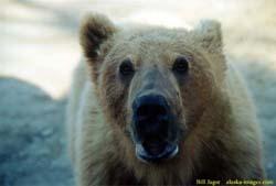 Bears kill and eat monkey at Dutch zoo