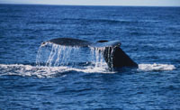 People book tours to watch whales in Virginia