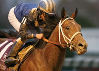 Breeders' Cup offers new cards