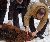 Russians Deeply Concerned About Muslims Slaughtering Animals in Public