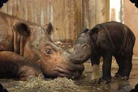 World's first rhino born by artificial insemination at Budapest Zoo