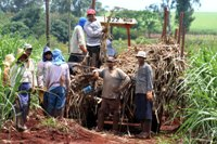 Brazilian authorities find 1,000 laborers working 14 hours on sugar cane plantation