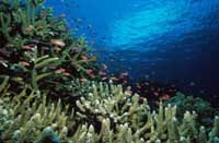 Study finds Pacific coral reefs dying faster than expected