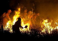 Greece's fire chief quits after deadly wildfires