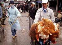 Deadly H5N1 virus continues to spread in Russian regions