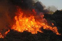 La Brea Fire Spreads Fast