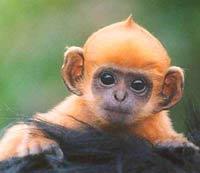 Man flies from Peru to New York hid monkey under hat
