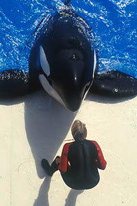 Whale attacks trainer during show at SeaWorld in San Diego
