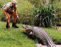 Australian `Crocodile Hunter' fan says he'll feed his son's placenta to goannas
