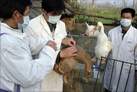 15-year-old Egyptian girl contracts bird flu
