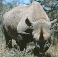 Japan rhinoceros to leave for Sri Lanka