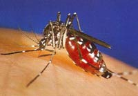 West Nile virus prompts worries
