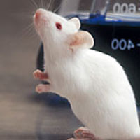 White mouse causes four-hour delay of Vietnam Airlines flight