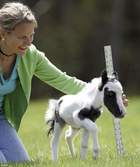 14-Inch-Tall Horse Was Born in New Hampshire
