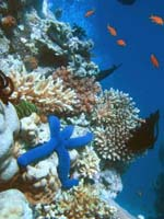 Global warming may have damaged coral reefs forever