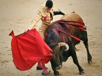 Catalonia Bans Bullfight