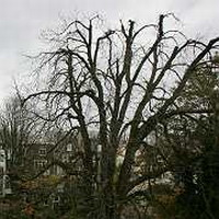 Anne Frank's tree may be saved