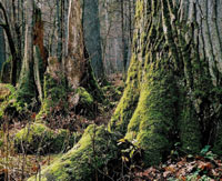 Environmental group asks Poland's President to prevent logging of Bialowieza forest