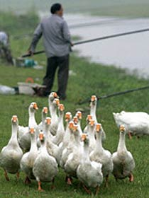 Bird flu in Russia