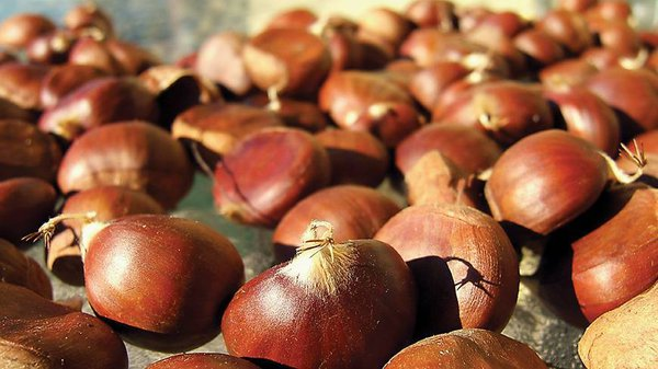 Saint Martin of Tours, the Indian Summer, Chestnuts: The explanation. 59237.jpeg