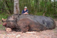 New wild giant pig found in Brazil Amazon