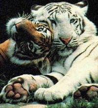 China to regulate wildlife trade