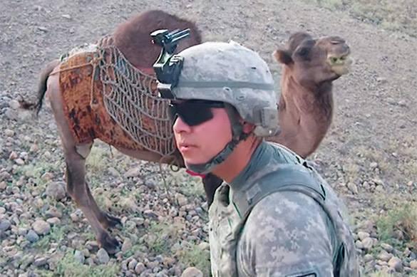 Afghan camel kicks US military. Video. Afghanistan