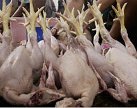 Bird flu may be easily transmissible between humans